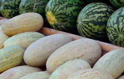 Новые стандарты регулируют качество дыни и арбузов